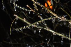 Beautiful Christmas tree branch with frozen drops of water stock photo