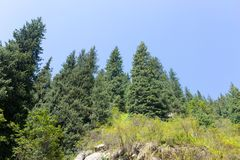 Beautiful Christmas tree in the mountains in summer.  Stock Image