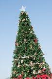 The beautiful Christmas Tree Stock Photos