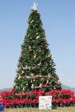 The beautiful Christmas Tree Stock Image