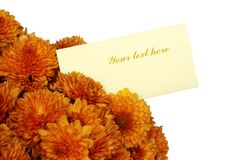 Beautiful Chrysanthemum bouquet. Chrysanthemum bouquet with blank card isolated on white Royalty Free Stock Image