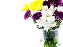 ิbeautiful chrysanthemum flowers and vase isolated on white background Royalty Free Stock Photo