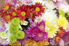 Beautiful  chrysanthemums bouquet Royalty Free Stock Images