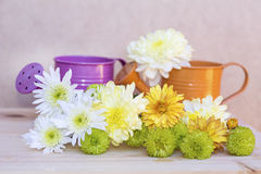 Beautiful  chrysanthemums bouquet and water cans Royalty Free Stock Photo
