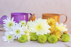 Beautiful  chrysanthemums flowers  and  orange and purple water cans Royalty Free Stock Images
