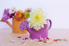 Beautiful  chrysanthemums flowers in orange and purple water cans Stock Photo