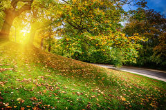 Beautiful city park in autumn Stock Image
