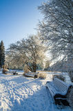beautiful city park with trees covered with hoarfrost royalty free stock images