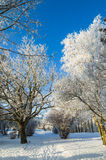 Beautiful city park with trees covered with hoarfrost Stock Images