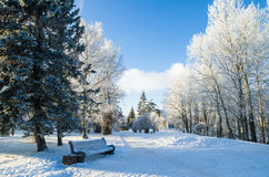 Beautiful city park with trees covered with hoarfrost Stock Photography