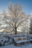 Beautiful city park with trees covered with hoarfrost Royalty Free Stock Photography