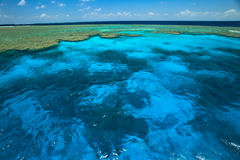 Beautiful Clam Gardens in Great Barrier Reef Park Stock Photography