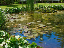 Beautiful classical design garden fish pond with water lily Stock Photography