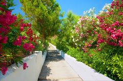 Beautiful classical Greek hotel road pathway to sea beach for tourists among red white rose colorful red rose white flowers and gr. Een palms walls. Greece Royalty Free Stock Photos