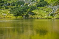 A beautiful, clean lake in the mountain valley in calm, sunny day. Mountain landscape with water in summer. Tatry mountains in Slovakia, Europe stock photography