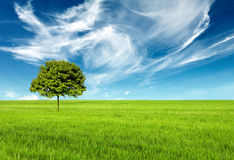 Beautiful Clean Landscape. A clean and sunny landscape Royalty Free Stock Photography