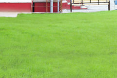 Beautiful clean lawn grass Stock Photo