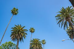 Palm trees with blue sky in Beverly Hills Royalty Free Stock Images