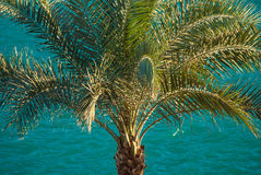 Beautiful clear blue turquoise sea ocean water surface with ripples and big palm on foreground Stock Image