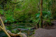 Beautiful clear creek located in Petrohue, surrounding of vegetation in Llanquihue Province, Los Lagos Region. Chile stock image