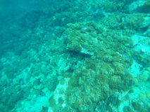 Beautiful clear underwater surface. Thailand Stock Photo