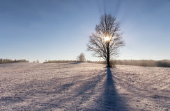 Beautiful clear winter landscape. Beautiful winter landscape with clear sky, a lonely tree in a field, and with a sunshine Stock Photo