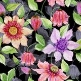 Beautiful clematis flowers on climbing twigs against black background. Seamless floral pattern. Watercolor painting. Hand painted illustration. Fabric vector illustration