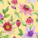 Beautiful clematis flowers on climbing twigs against yellow background. Seamless floral pattern. Watercolor painting. Hand painted illustration. Fabric Royalty Free Stock Photos