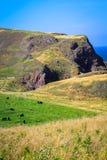 Beautiful Cliffs of Scotland, St Abb`s Head, UK. Beautiful Cliffs of Scotland, St Abb`s Head in the UK Royalty Free Stock Images