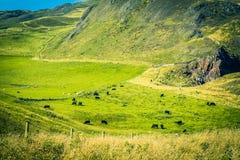Beautiful Cliffs of Scotland, St Abb`s Head, UK. Beautiful Cliffs of Scotland, St Abb`s Head in the UK Stock Photography