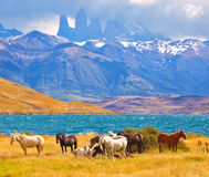 Beautiful cliffs Torres del Paine Royalty Free Stock Photo