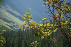 A beautiful close look at the tree in montains. Mountain landscape with natural trees in forest. Tatra mountains in Slovakia, Europe royalty free stock photos
