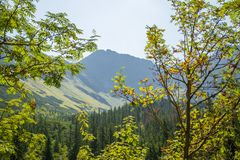 A beautiful close look at the tree in montains. Mountain landscape with natural trees in forest. Tatra mountains in Slovakia, Europe stock photo
