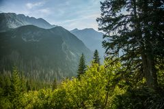 A beautiful close look at the tree in montains. Mountain landscape with natural trees in forest. Tatra mountains in Slovakia, Europe royalty free stock photo