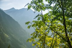 A beautiful close look at the tree in montains. Mountain landscape with natural trees in forest. Tatra mountains in Slovakia, Europe stock photos