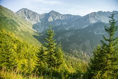 A beautiful close look at the tree in montains. Mountain landscape with natural trees in forest. Tatra mountains in Slovakia, Europe stock image