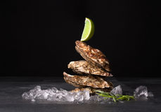 Beautiful close oysters on a black background. Delicious tropical sea mollusk with lime on top. The greatest delicacy. Copy space. Stock Images