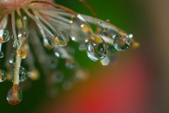 Beautiful close up with drops Stock Photography
