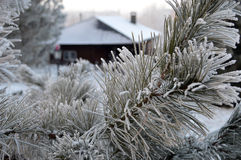 Beautiful close up photo of frosty plant Royalty Free Stock Photos