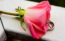 beautiful close-up rose and wedding rings with water drops Royalty Free Stock Image
