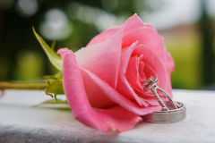 beautiful close-up rose and wedding rings with water drops Stock Photos