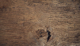 Beautiful close up textured of bark wood use as multipurpose nat Royalty Free Stock Images