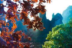 Beautiful close up view of leaves Meteora, Greece Royalty Free Stock Images