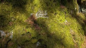 Beautiful close up view of stone overgrown with green moss. Beautiful nature backgrounds stock video