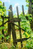 Beautiful closed old rural gate with hop Stock Photos