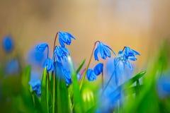 Beautiful closeup blue flowers Stock Image