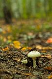 Beautiful closeup of forest mushrooms royalty free stock photography
