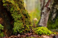 Beautiful closeup of forest mushrooms stock photos