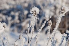 Beautiful closeup with frost crystals on plants in the winter morning Stock Photo
