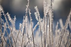 Beautiful closeup of ice crystals on grass. In sunlight at sunrise on blurred background Royalty Free Stock Photo